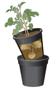 GardenJoy Potato Planter
